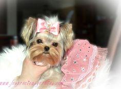 OMG so pretty! Tag a Dog Lover <3 #Yorkie #Yorkies #YorkieLover #LoveYorkies #YorkieLife #YorkshireTerrier #YorkshireTerrierLover #LoveYorkshireTerrier #pet #dog #puppy #PinoyYorkies #PinoyYorkshireTerrier #Philippines #BuzzfeedAnimals #DogsOfPinterest