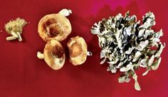 Foods for the immune system: mushrooms