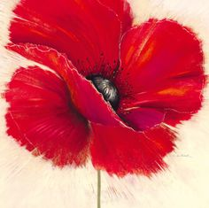 Drama - red flower painting by Marilyn Robertson Poppies Tattoo, Red Poppies, Stretched Canvas Prints, Flower Art, Watercolor Art, Canvas Art, Art Prints, Drawings, Artwork