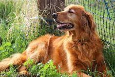 Random jottings: How Many Dogs Does It Take to Change A Light Bulb?...