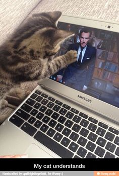 Haha this is perfect! My cat watches Sherlock with me and likes it, but she doesn't love Benedict as much as I love Benedict.