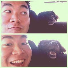 Oh hai #dogs