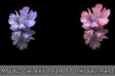 Download Samsung Galaxy Z Flip Wallpapers Droidviews Stock Wallpaper Samsung Wallpaper Samsung Galaxy