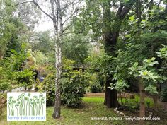 Ferny Hill Retreat, an artistic holiday rental in Emerald Victoria, is tucked away behind greenery. You can hardly see it from the street! Holiday Apartments, Romantic Couples, Be Perfect, Greenery, Emerald, Street View, Victoria, Outdoor Structures, Clouds