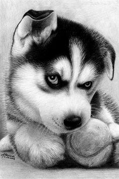 A Drawing of An Alaskan Puppy