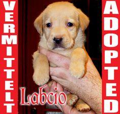LABCIO found a new home in Germany few minutes ago. Good luck, little friend! www.AnimalHelp-World.jimdo.com