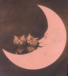 How sweet: not a little man in the moon, but two kittens....