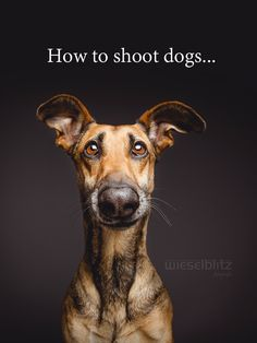 How To Shoot Dogs by Elke Vogelsang on 500px