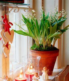 Tunnetko joulukukat? – Kotiliesi
