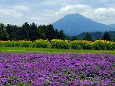 遥か臨む大山 (Tottori Hanakairo Flower Park in summer) #Japan #Summer #Park