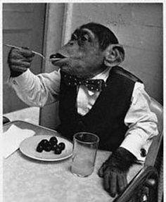 eat with monkey