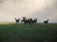 Look out for the breath taking #deer on the land at Snaffles #Frant