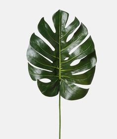 Image may contain: plant and nature Poster Photo, Poster S, Tropical Leaves, Tropical Plants, Flowers Wallpaper, Plants Are Friends, Green Plants, Indoor Plants, Planting Flowers
