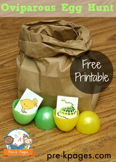 Hunting for Oviparous Eggs Activity in Preschool and Kindergarten Preschool Eggs, Preschool Themes, Easter Activities, Spring Activities, Preschool Classroom, Preschool Lessons, Classroom Ideas, Animals Hatched From Eggs, Pre K Pages
