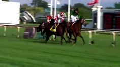 Jill Byrne recaps the Arlington International Festival of racing. Arlington Park, Arlington Heights, International Festival, Racing, Horses, Day, Animals, Running, Animales