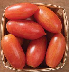 """Lot de 20 graines de tomate /"""" artisan blush tiger /"""" année 2019"""