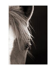 Art Addiction Horse, Right, http://www.myhabit.com/redirect?url=http%3A%2F%2Fwww.myhabit.com%2F%3F%23page%3Dd%26dept%3Dhome%26sale%3DA1Q3AAASWN0PFU%26asin%3DB009ZPYD6I%26cAsin%3DB009ZPYD6I
