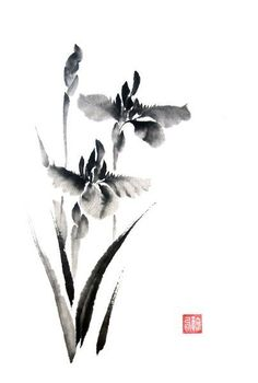 Risultati immagini per iris sumi-e Japanese Watercolor, Japanese Painting, Watercolor And Ink, Watercolor Flowers, Chinese Painting Flowers, Sumi E Painting, Tinta China, Art Japonais, Illustration