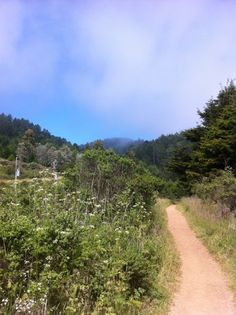 The Dipsea trail Marin County California