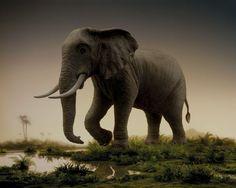 """L'éléphant"" by Didier Massard"