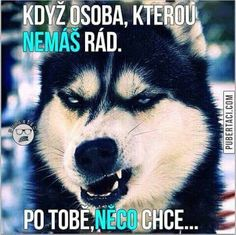 Image about funny in Dogs by Anastasiya on We Heart It Animal Pillows, Decorative Cushions, Husky, Twins, Dogs, Animals, Image, Humor, Animales