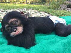 Zoological Wildlife Foundation – ZWF Miami – The #2 attraction in Miami – TripAdvisor