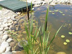 Jardim Autóctone: Construção de um charco/lago