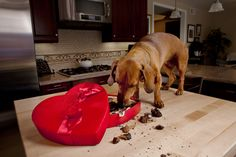 Nearly 2,000 #dogs estimated to suffer from #chocolate #poisoning this #Christmas