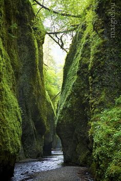 Oneonta Gorge.. Check! :D