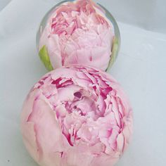 Peonies the most popular pink beautiful flower to be preserved this summer !