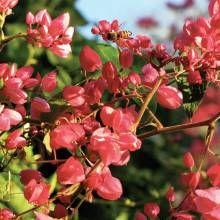 desert garden vines