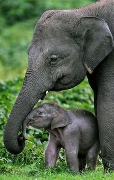 Elephant mom and newborn