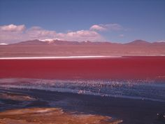 Laguna Colorada is located at the Andean Plateau in Bolivia at about 3,700 m altitude and close to the border with Chile. It is a shallow salt lake with a deeply red colour, which is caused by red sediments and some red algae. James's flamingo, aka the puna flamingo, populates here.
