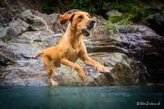 Mable Labrador Retriever, Dogs, Animals, Labrador Retrievers, Animales, Animaux, Animal Memes, Animal, Pet Dogs