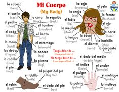 Students can listen to the names of the different body parts in both Spanish and English. Perfect for teaching a second language or helping ESL students. Spanish Worksheets, Spanish Vocabulary, Spanish Language Learning, Teaching Spanish, Vocabulary Games, Common Spanish Words, How To Speak Spanish, Learn Spanish, Spanish Lesson Plans