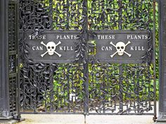 The Poison Garden at England's Alnwick Garden is beautiful—and filled with plants that can kill you.  Ooooh, interesting!