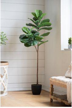 Fiddle-Leaf Fig Tree – Olive and Sage Fiddle Leaf Fig Tree, Sage, Leaves, House, Salvia, Home, Homes, Houses