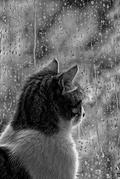 Watching the rain… | by LoveSumer on DeviantArt
