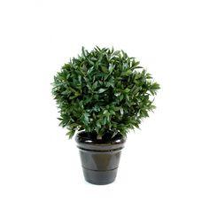 buis boule sur 2053 3043 jardin pinterest buis terrasses et recherche. Black Bedroom Furniture Sets. Home Design Ideas