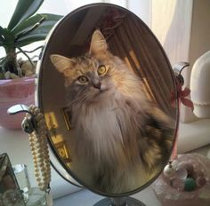Yes, you are beautiful! Serefina. Maine Coon cat.