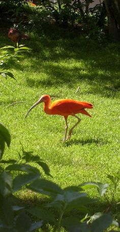 zoo bird orange munich tierpark hellabrunn Travelogue, Austria, Switzerland, Germany, Orange, Photography, Animals, Photograph, Animaux