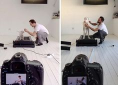 This Dog Was Given Little Time To Live — But Each Happy Moment Is Caught In Time-Lapse. Amazing!