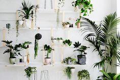 15x Eucalyptus Huis : Houten bloempot voor binnen house plants pinterest plants and