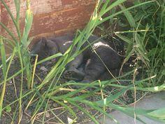 Kitten in the shade