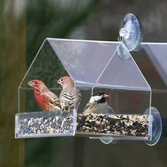Amazon.com: Grateful Gnome - Window Bird Feeder - Clear Acrylic House for Small or Large Wild Bird Like Finch and Cardinal - Best Cheap Modern Unique and Unusual Window Bird Feeder Out There - Cool (Virtually Squirrel Proof) Platform Tray Station for Backyard Window. Lifetime Guaranteed: Patio, Lawn & Garden