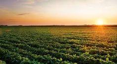 crops - Google Search