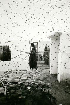 © Graciela Iturbide, 1988, Cemetery Juchitan Mexico