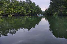 Las comunidades negras de Nuquí (Chocó) acaban de lograr que el Gobierno declare sesenta mil hectáreas del Pacífico colombianocomo Área Marina Protegida, bajo una figura que les permitirá conserva...