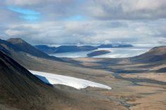 Fant mumifisert skog i Arktis | forskning.no