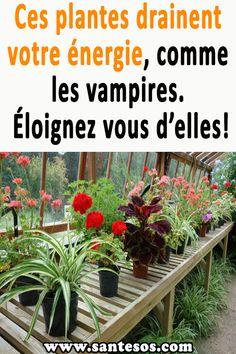 Ces plantes drainent votre énergie, comme les vampires. Éloignez vous d'elles! #plantes #énergie #santé #plantesvampires #plantesutiles